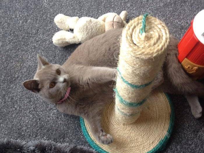 cat care services warrington