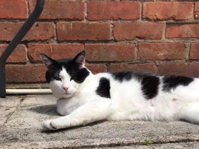 Cat sitting and cat care Warrington