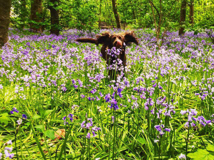 dog walking and pet care warrington - forest dog walk
