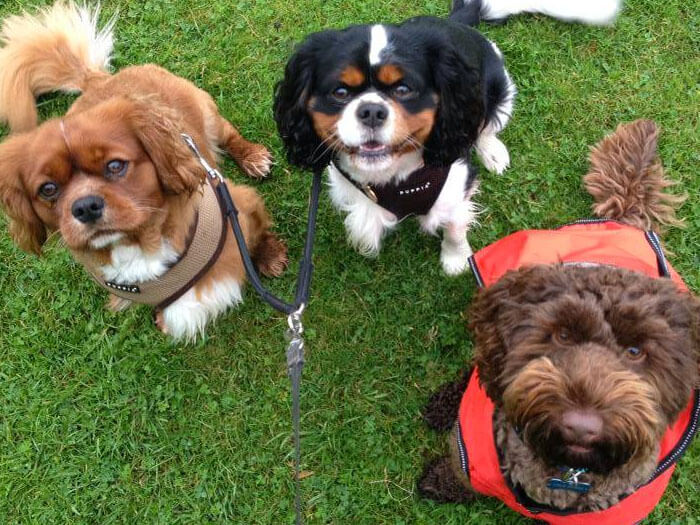 dog walking warrington - group dog walk