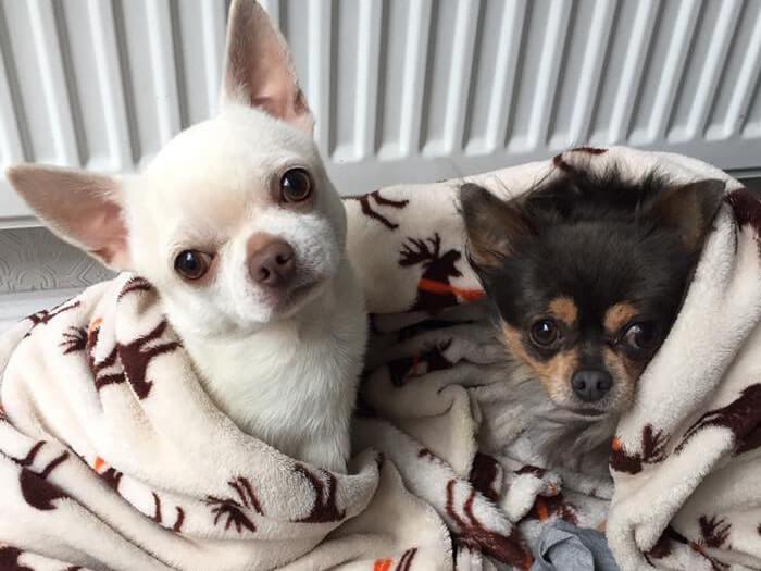 Puppy care Warrington